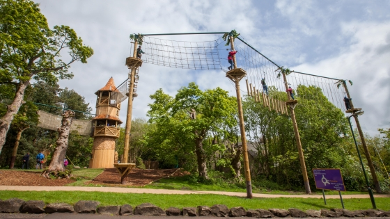 The Tree Top Challenge